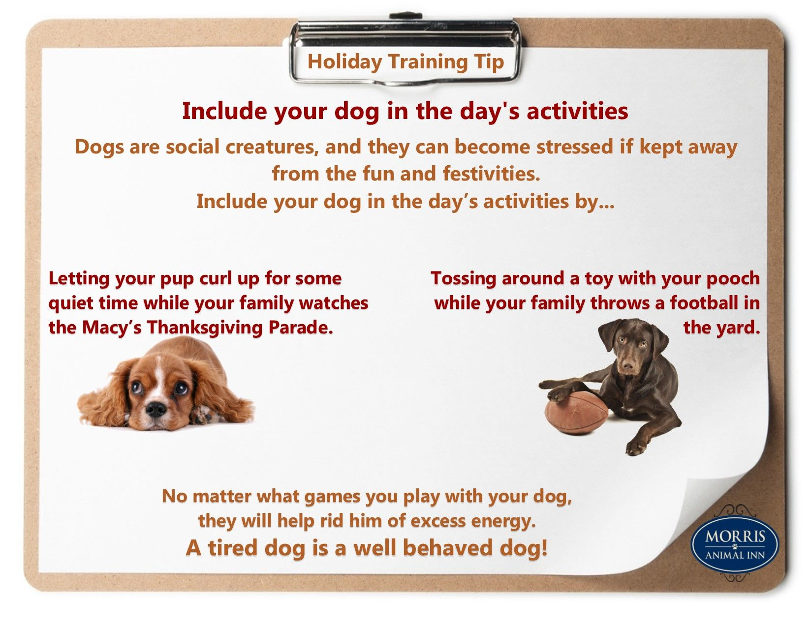 Trainingtiptuesday Find Out How You Can Include Your Dog In Your