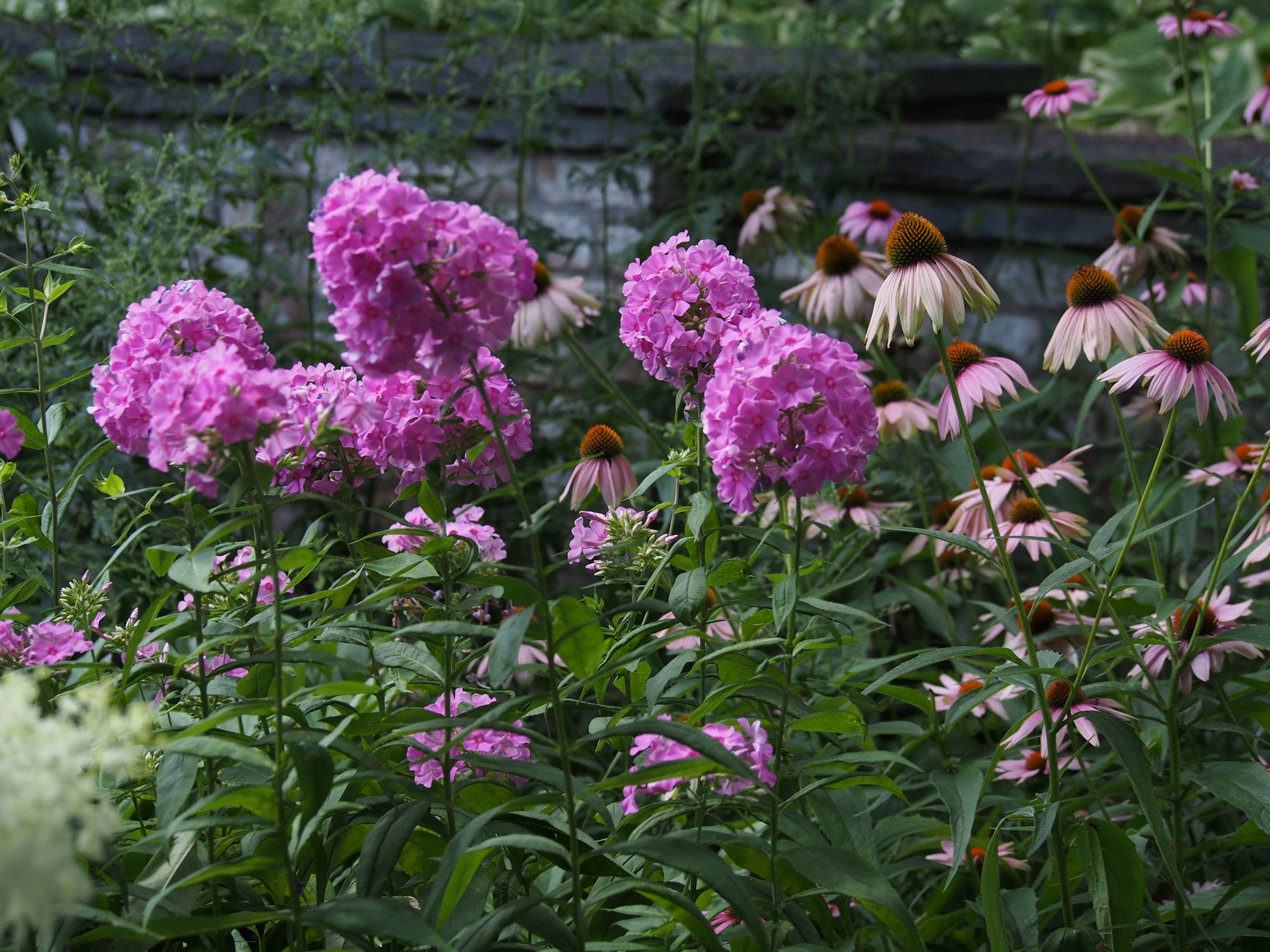 Beautiful Purple Flowers Minnesota Landscape Arboretum