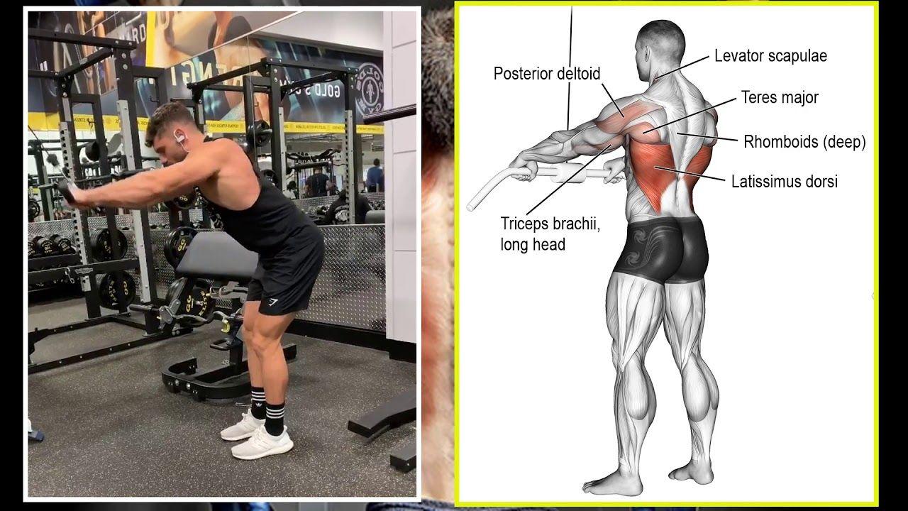 7 تمرين أساسية تعريض لعضلة الظهر و حصول على ظهر ضخم و على شكل V Taper Back Youtube Full Body Workout Fitness Body Workout