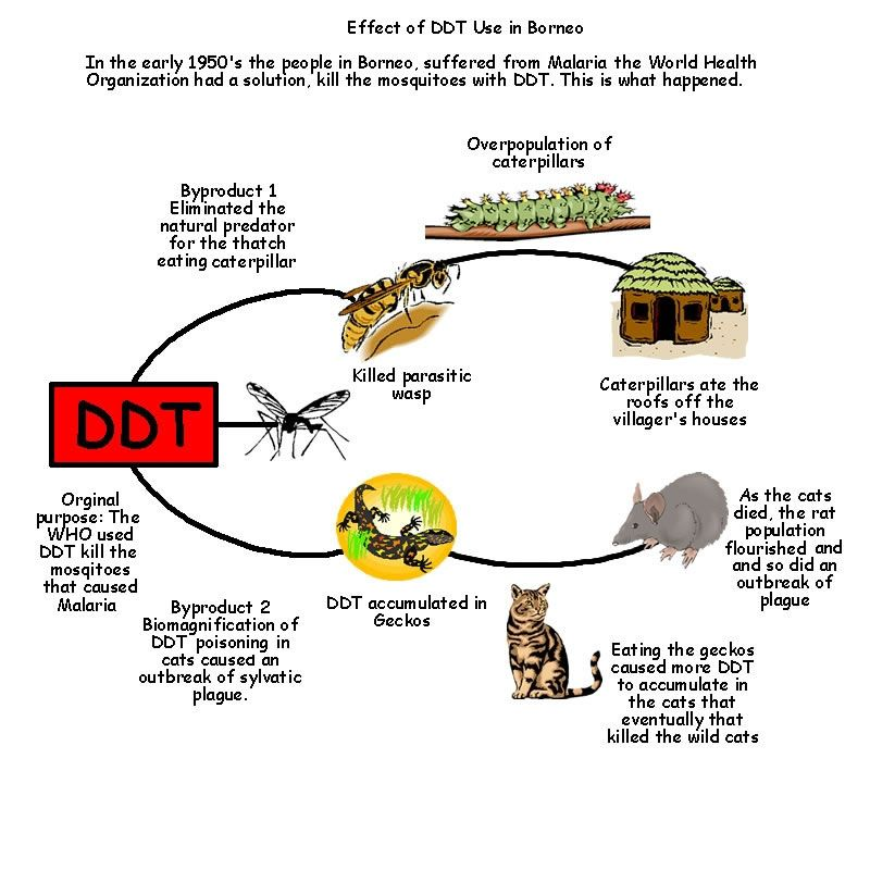 DDT- the introduction of DDT into the enviorment and plant life ...