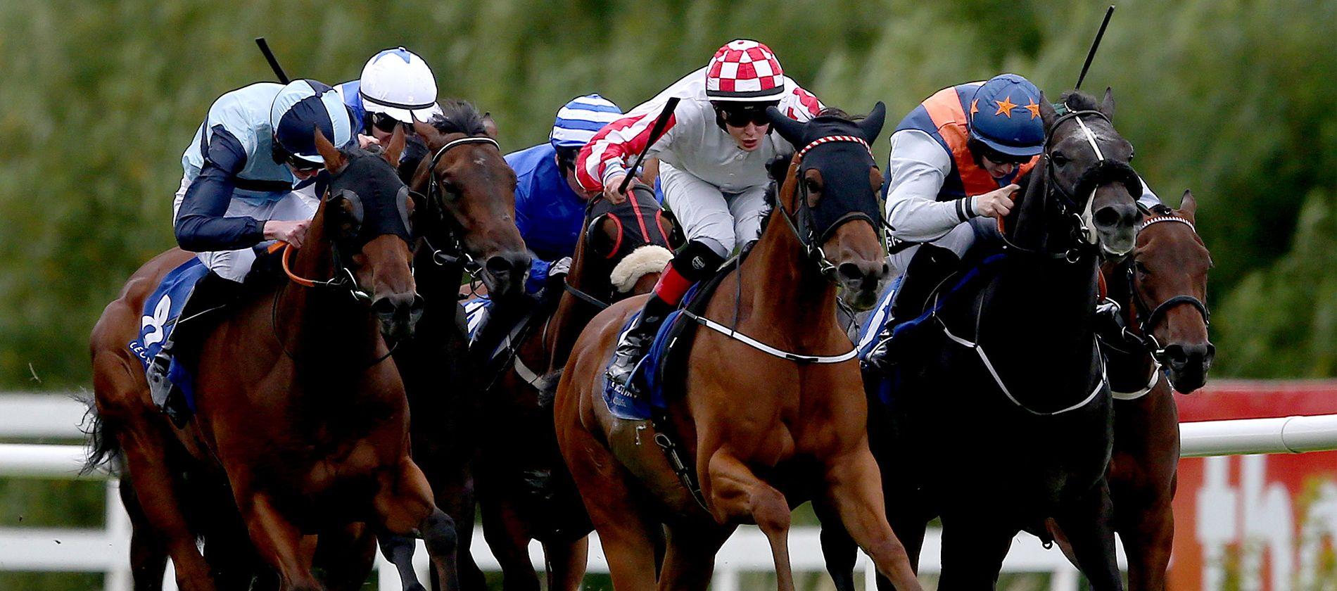 Betting Offers Horses, Horse racing, Horse betting