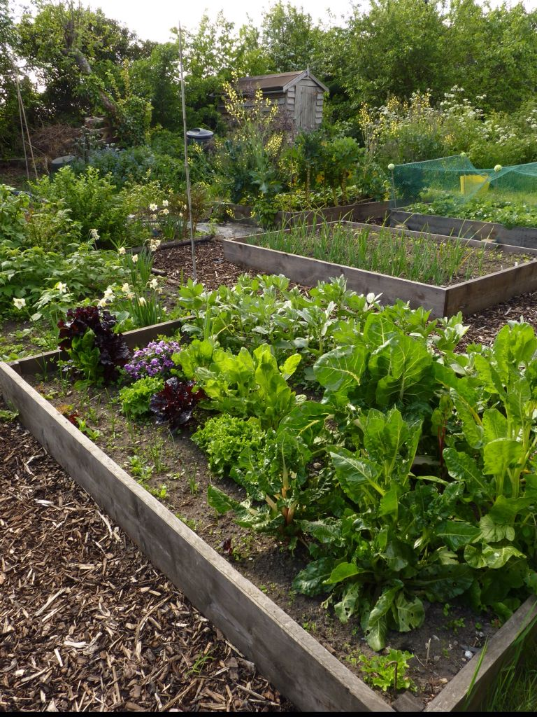 My allotment raised beds one year on. Constructed with new