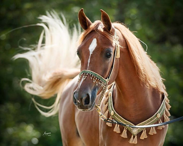 Image result for karen mcclymonds horse | Dreamy Ponies | Pinterest | Horses, Beautiful horses ...