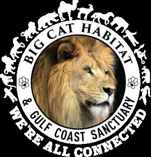 Big Cat Habitat and Gulf Coast Sanctuary is an ever
