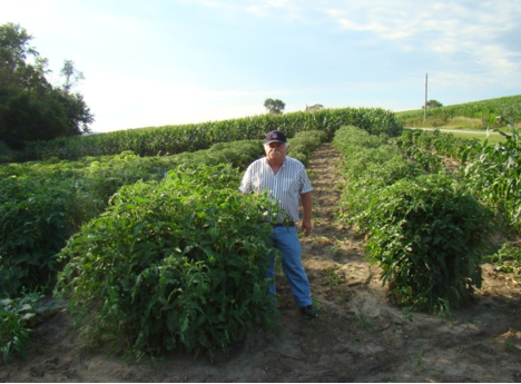 A customer who relies on our plant start for his 300 tomato plants ...