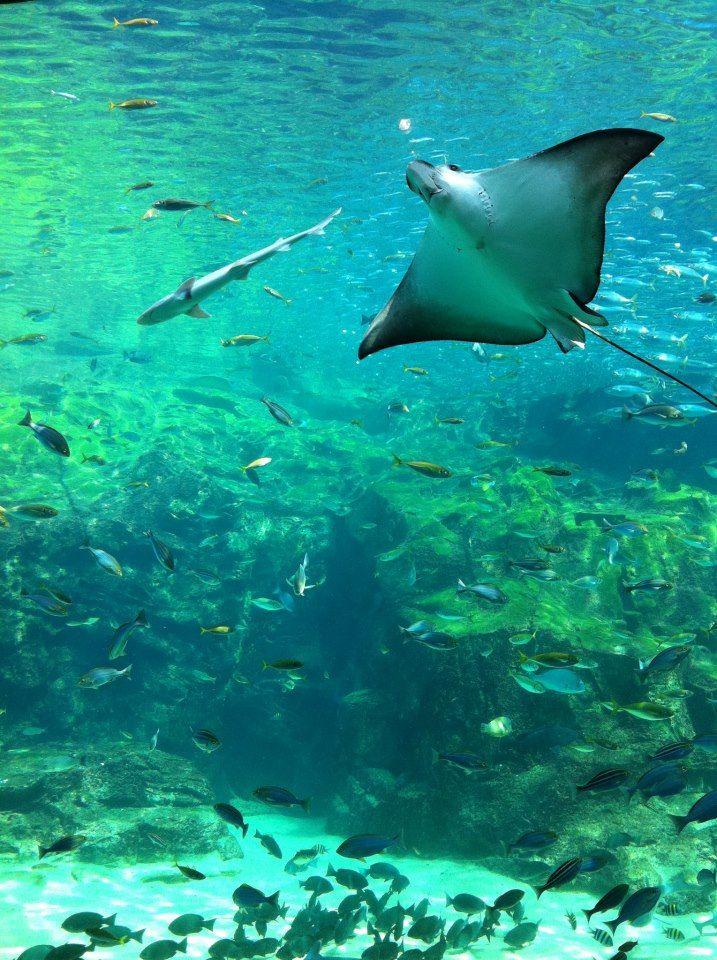 【肥前 佐世保】長崎県佐世保市の西海パールシーリゾートにある九十九島水族館海きららでは、このような優雅な光景を楽しめます。光の加減がうまい具合だからか、暗すぎず明るすぎず、神秘的なムードをかもし出しています。 写真 / 文 : 在津吾朗