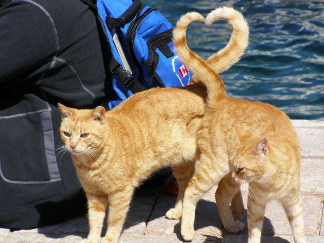 I Took Over 1000 Pictures In Greece And This Is The Only One Anybody Ever Wants To See Cat Love Cats And Kittens Cat Photo