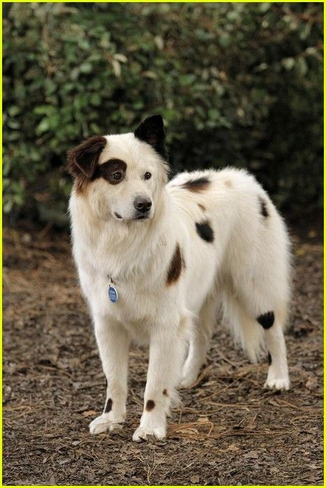 Stan From Dog With A Blog Dog With A Blog Dog Breeds