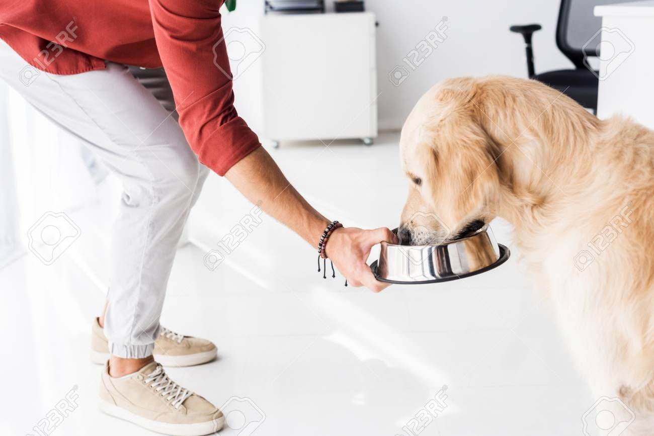 cropped view of man feeding golden retriever dog from