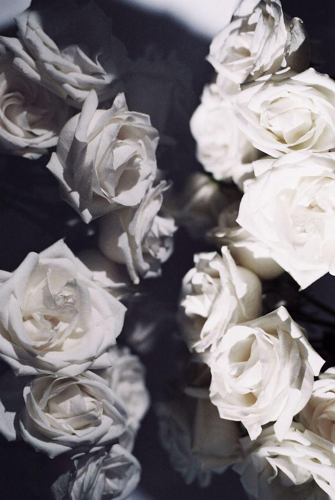 White Roses Black Background Flowers Roses Bliss