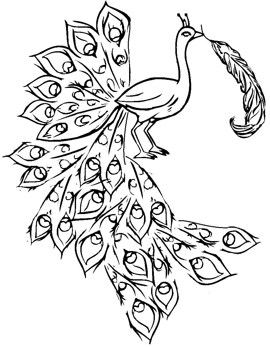Free coloring pages of peacock feathers coloring everyday printable - Free Printable Peacock Coloring Pages