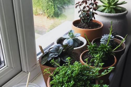 How to Arrange Indoor Plants   Interior plants   Plants, Indoor