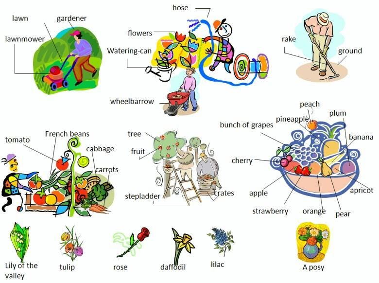visual dictionary pdf for elementary students