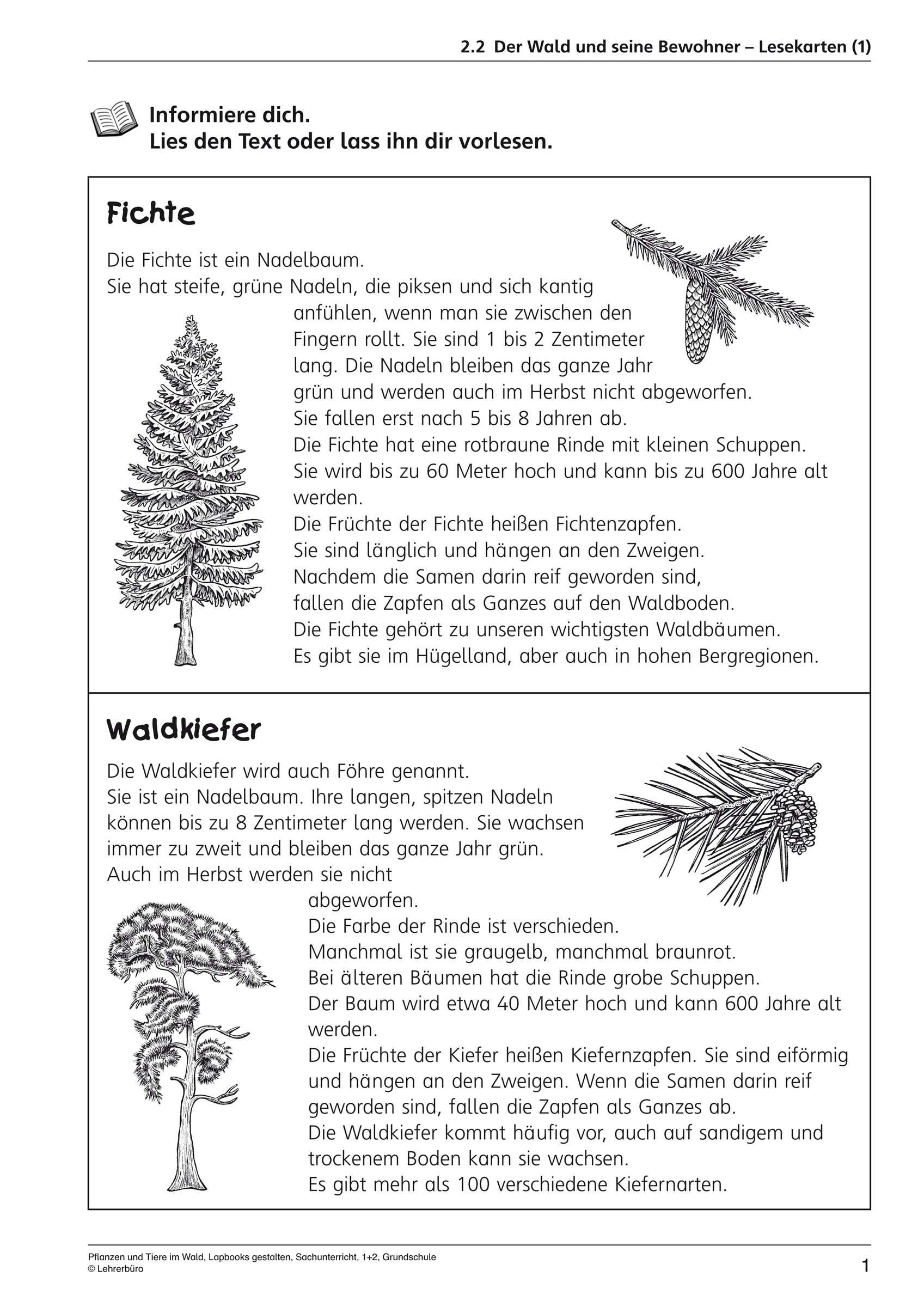 Haufigste Suchbegriffe Lehrerburo Mit Stockwerke Des Waldes