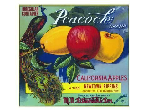 Watsonville California Peacock Bird Apple Fruit Crate Label Art Print