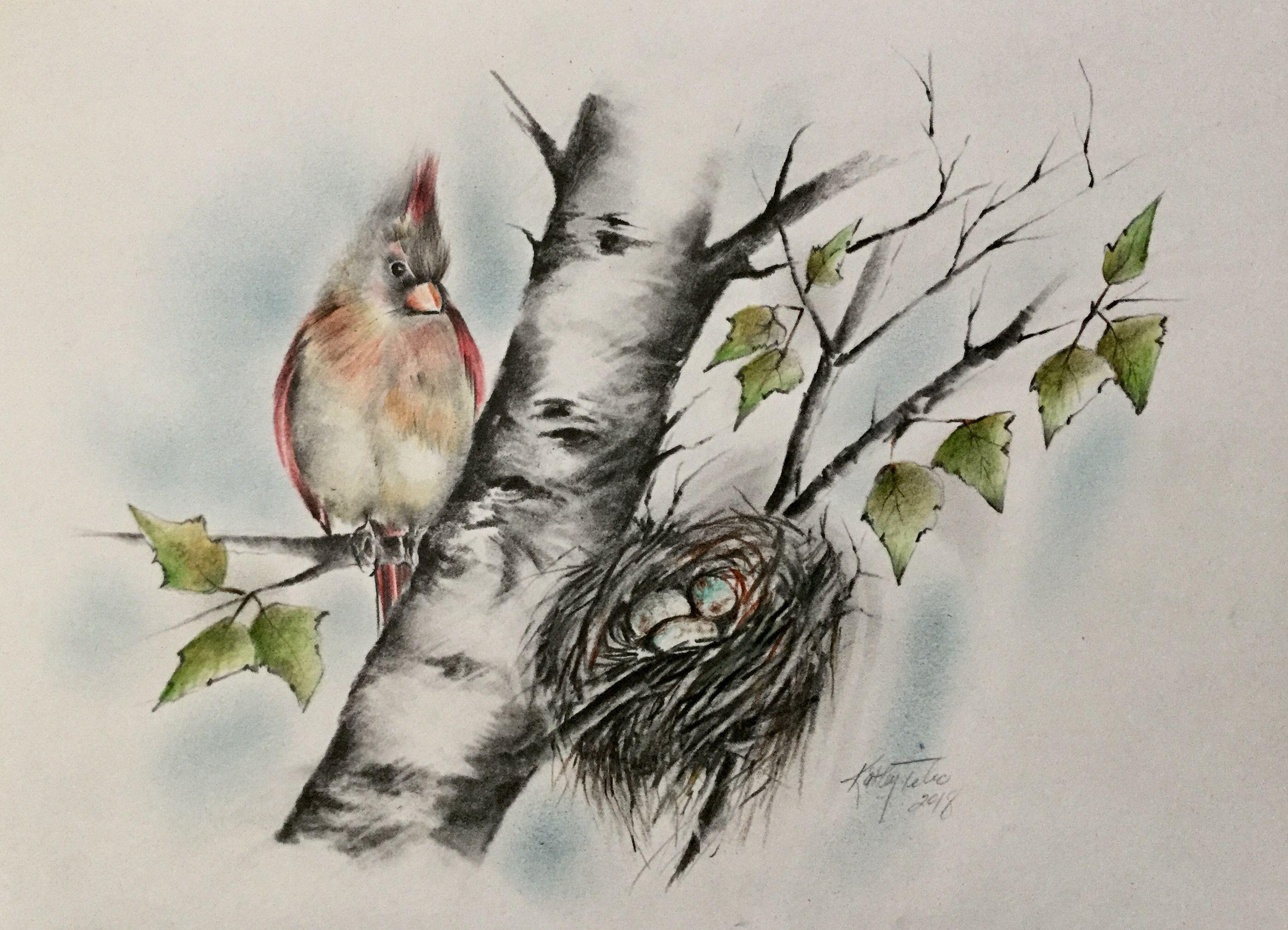 Cardinal Nest Drawing Drawings Custom Drawing Fine Art