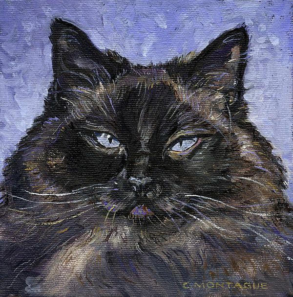 Portrait Of A Ragdoll Cat. Artist Christine Montague