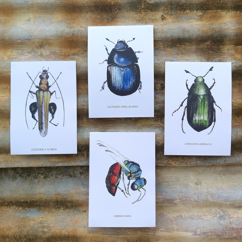 Set of 4 UK insect prints   Watercolour insect art print A5 (21x14.8cm)   Postcard sized prints   Linen bond paper   Multi set   Matching #ArchivalPrint #HomeschoolNature #HomeOfficeArt #EntomologyArt #EducationalPrint #UkWildlife #InsectPainting #NatureWallArt #GardenCreatures #ScienceDrawings