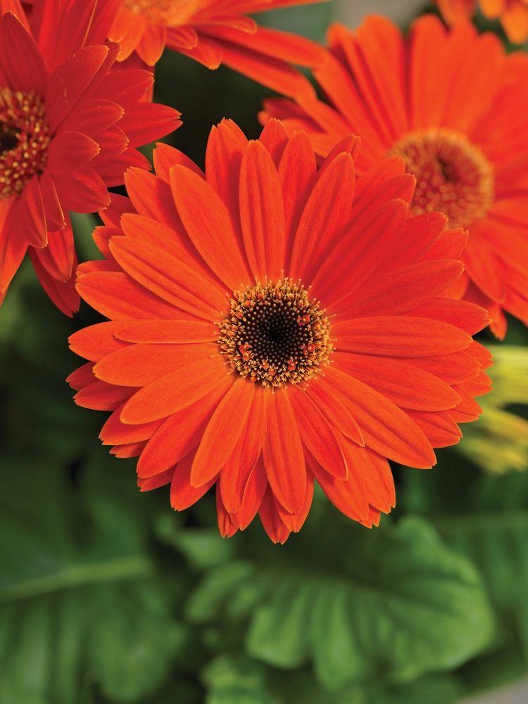 New Flowers Vegetables Herbs Edibles Garden Backyard Flowers Flowers Feed Flowers