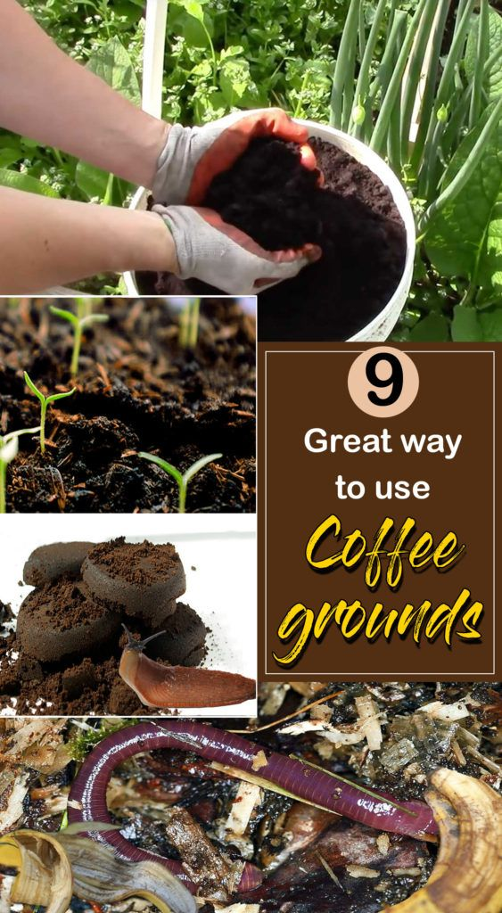 9 Great way to use Coffee grounds Uses for coffee