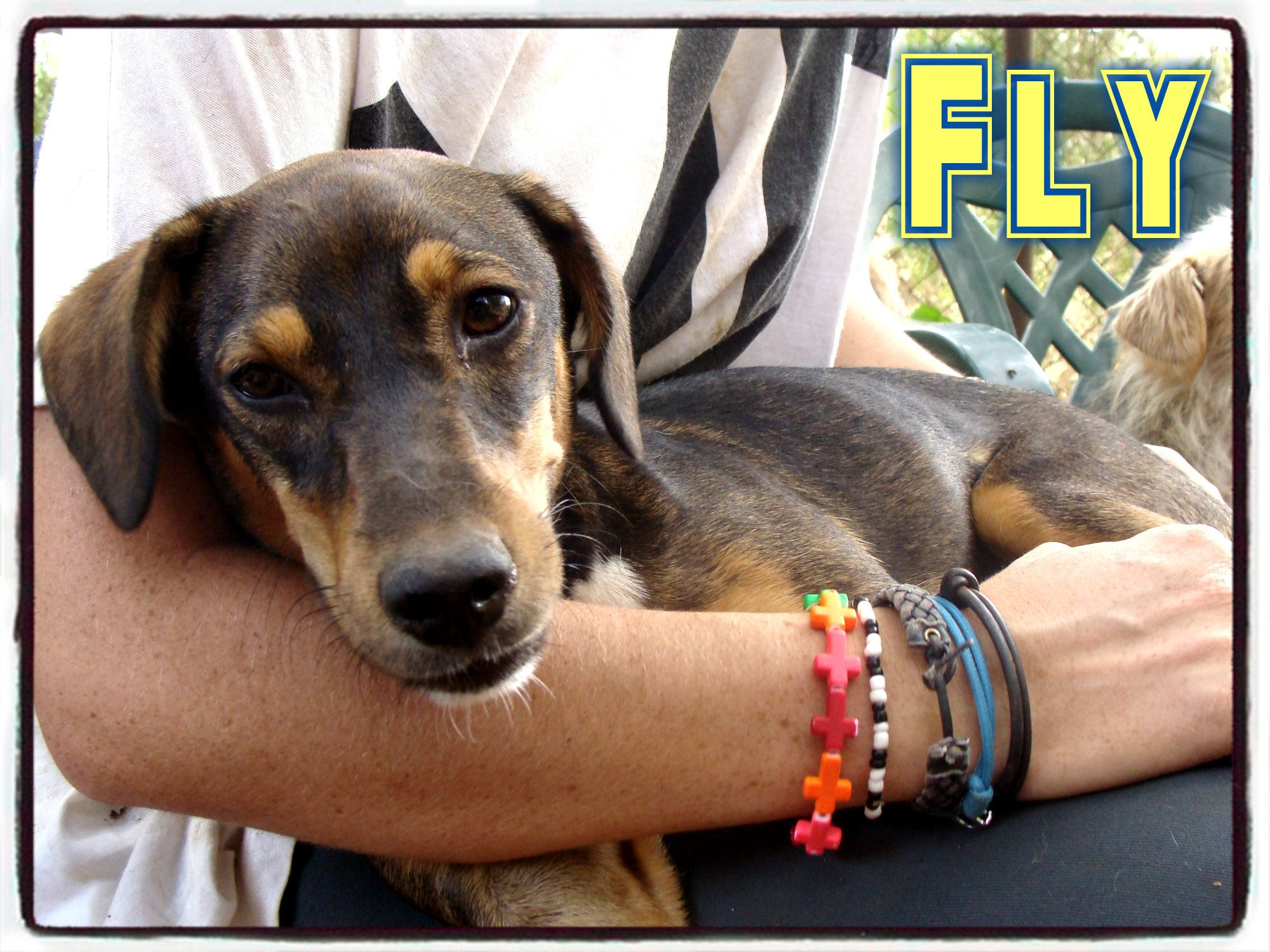 #Fly arrived to our Refuge flying. She was through the fence of our shelter. We ...
