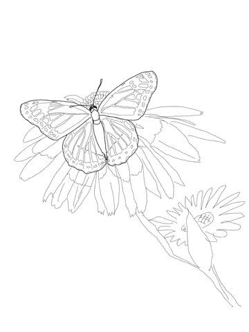 Viceroy Butterfly Coloring Page From Category Select 24659 Printable Crafts Of Cartoons Nature Animals Bible And Many More