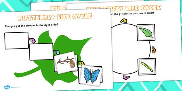 Butterfly Life Cycle Worksheets Butterfly Life Cycle Life Cycles Butterfly Life Cycle Activity