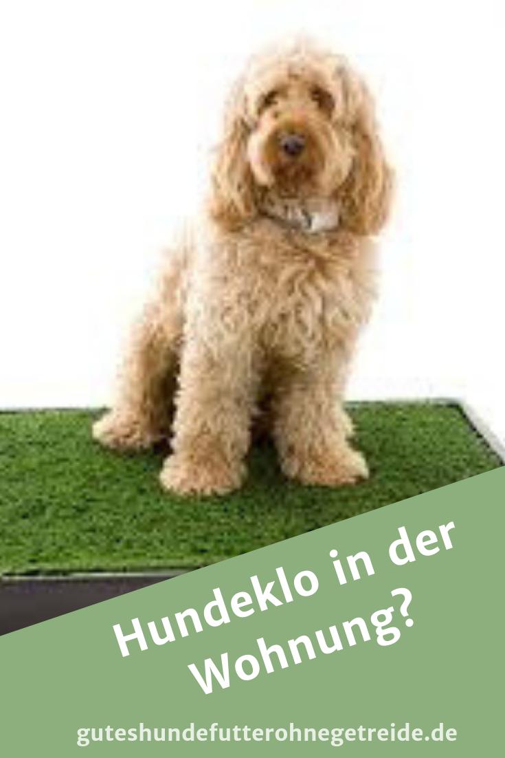 Hundeklo Fur Die Wohnung Hunde Welpen Hundeverhalten