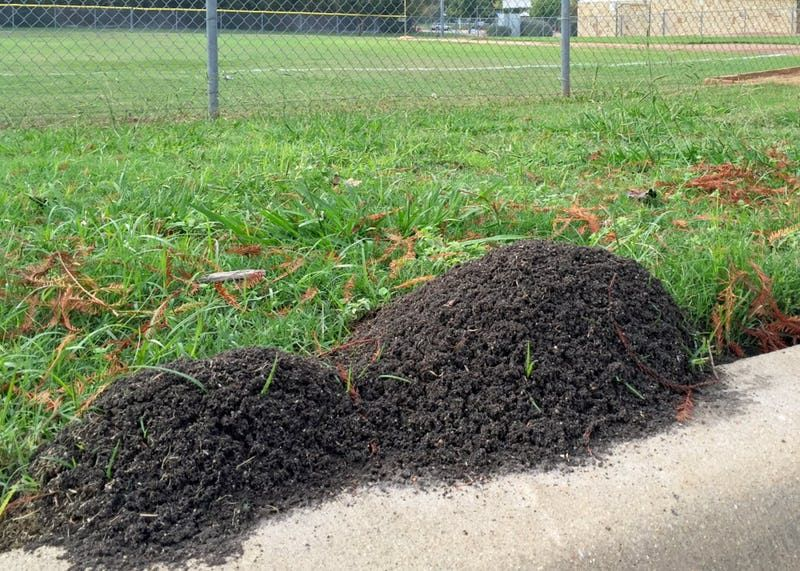 Fire Ant Season Is Here And This Is What Really Works To Get Rid