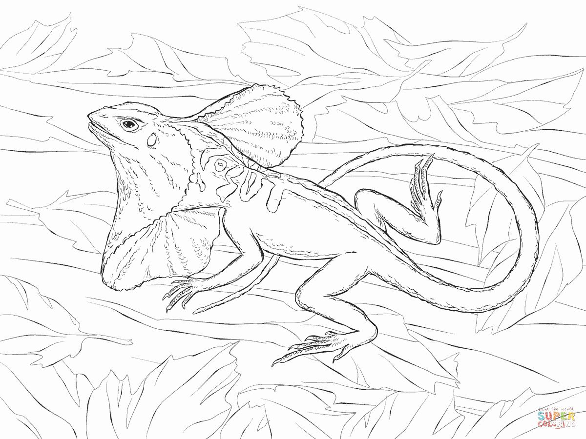 Coloring Pages Animals Realistic Unique Realistic Frill Necked Lizard Coloring Page In 2020 Coloring Pages Dragon Coloring Page Animal Coloring Pages
