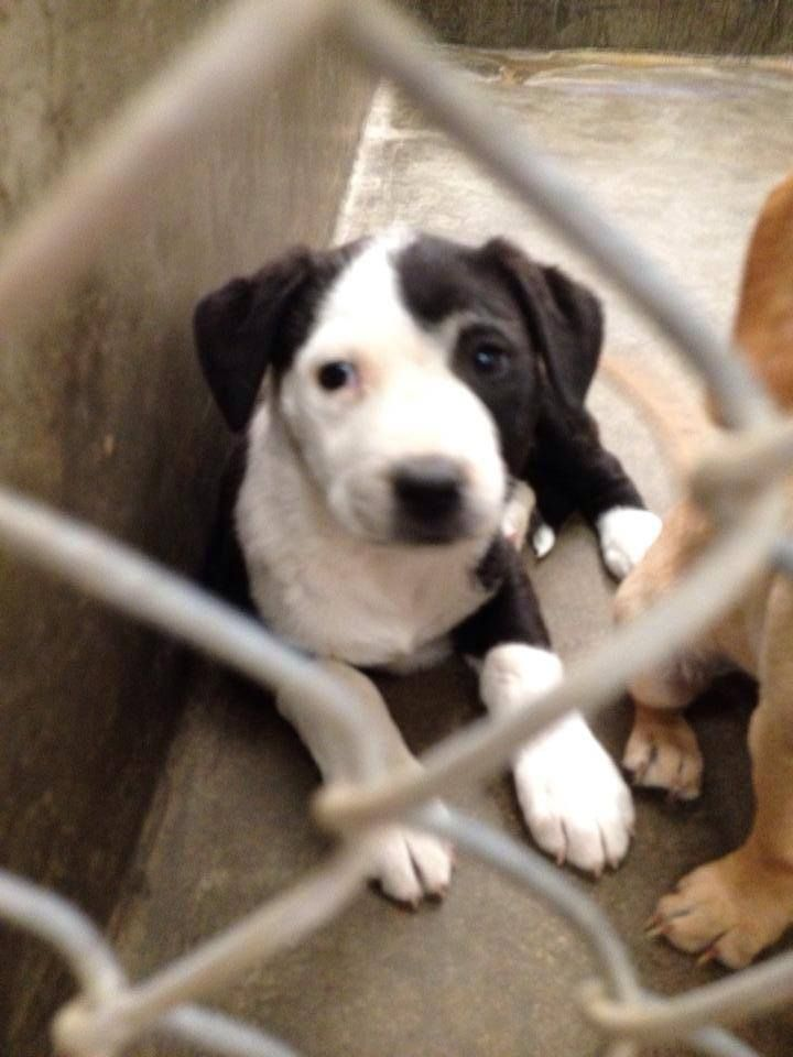 ^^ PUPPY HAS LESS THAN 4 HRS TO LIVE ^^  URGENT!! Will die if not out before 7pm Tonight 05/13/14!!  Lab mix female less than 4 months.  Kennel A21 Located at Odessa, Texas Animal Control. 432-368-3527.