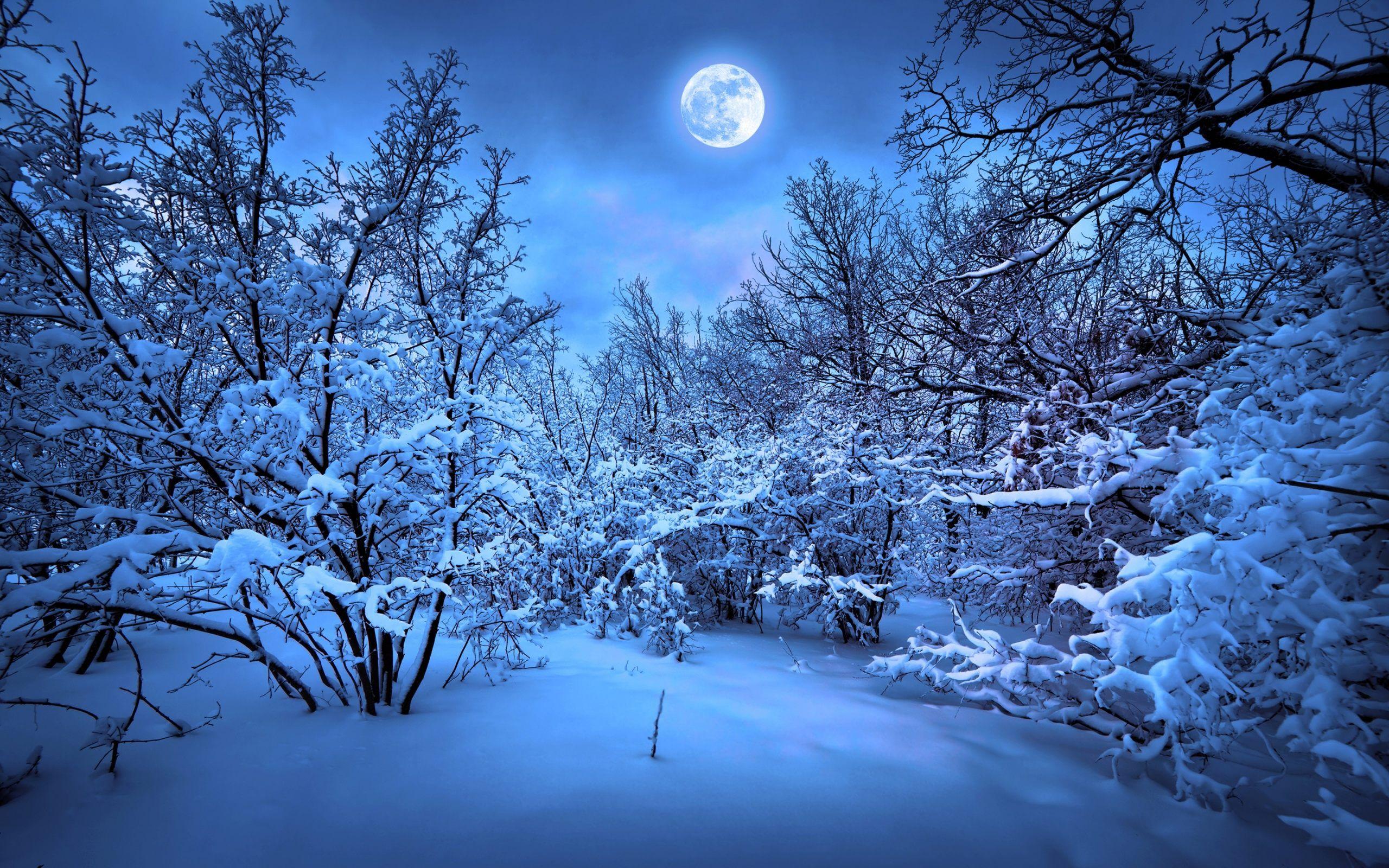 Fantastic Wallpaper Home Screen Snow - df37ac3d1dc39a6491e826559f3cfe7b  You Should Have_175626.jpg