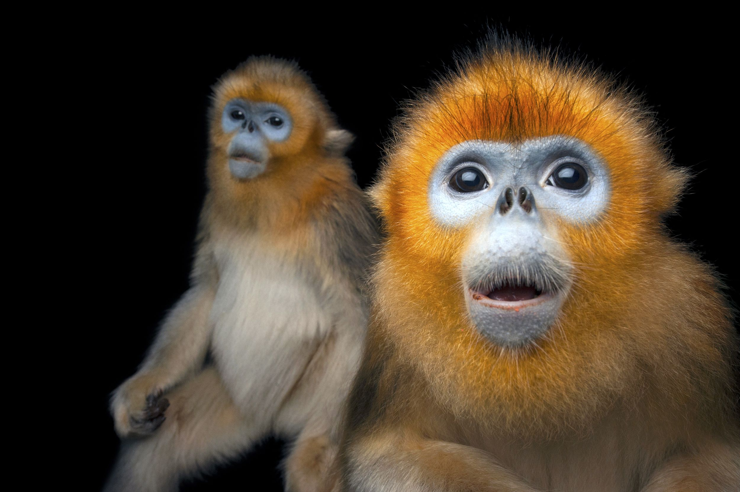 National Geographic Photographer Joel Sartore Has Visited 40