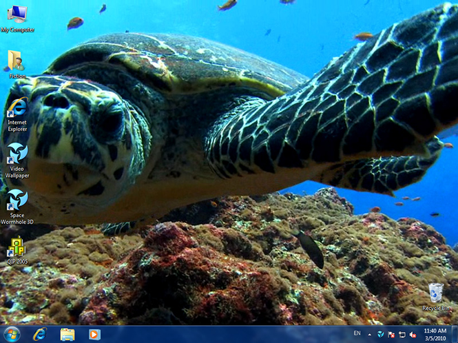 Dreamscene Video Wallpaper Free Download For Windows 10 7 8 8 1 Free Animated Wallpaper Turtle Turtle Swimming