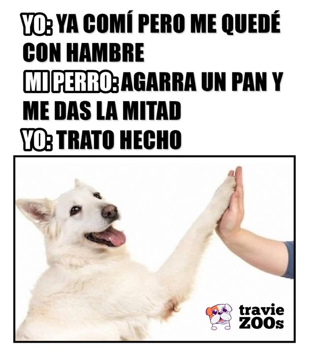 Nadie Me Entiende Tan Bien Como Tu Memes Divertidos Mascotas Frases Humor Divertido Sobre Animales