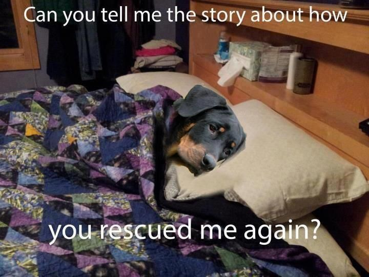 Can You Tell Me The Story About How You Rescued Me Again Funny