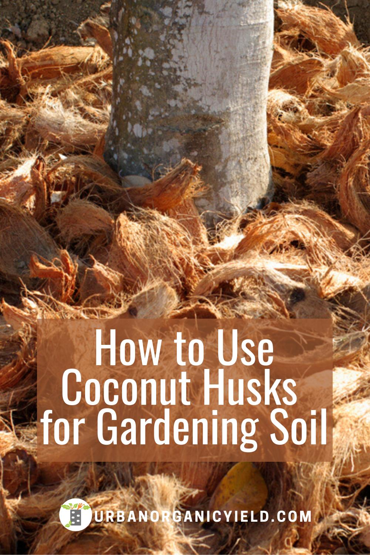 df3a46a6a52fef5cdfd15e00e4fba387 - How To Use Coconut Coir In Gardening