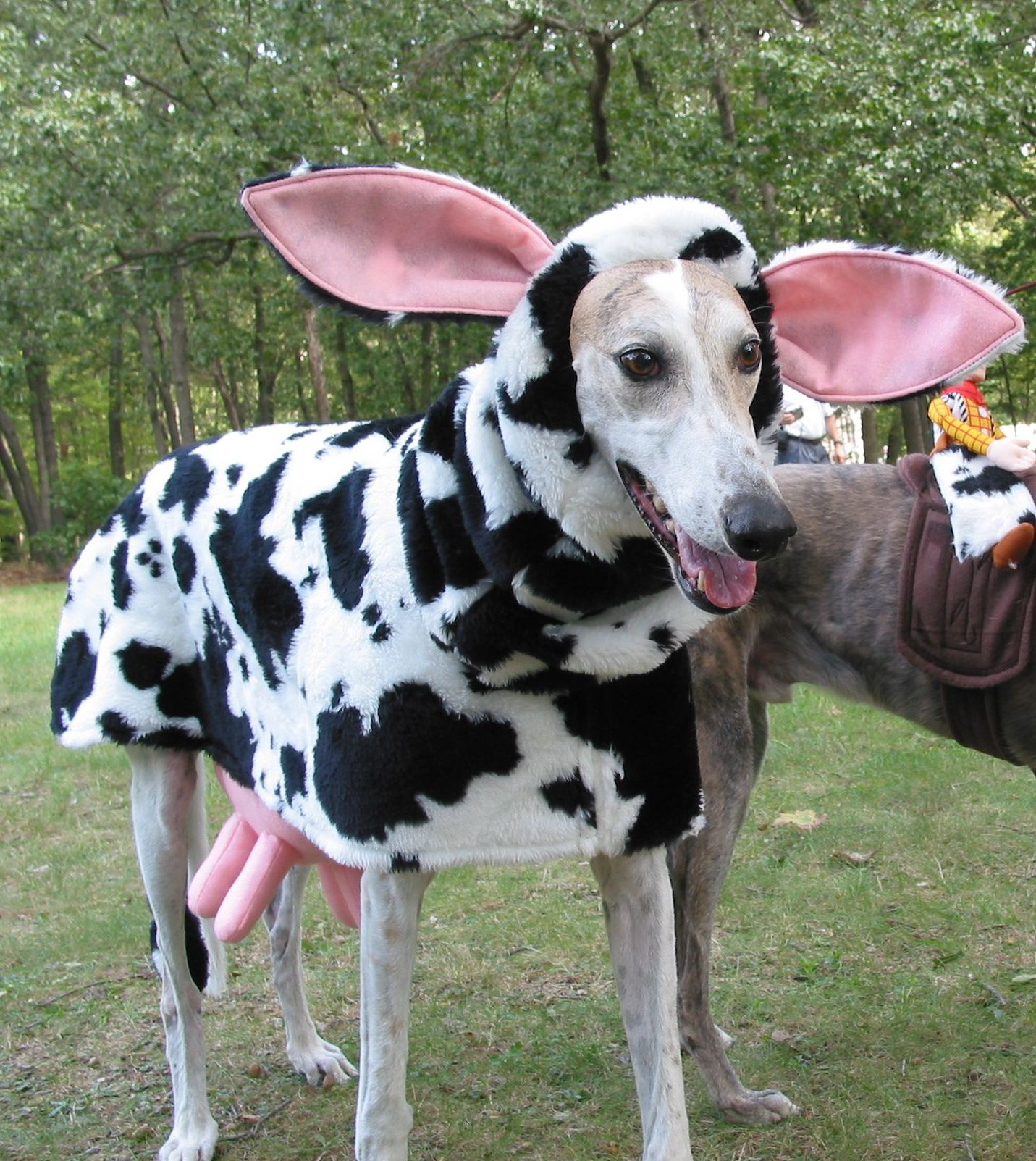 Hilarious Greyhound Costume for Halloween | Dog Halloween ...