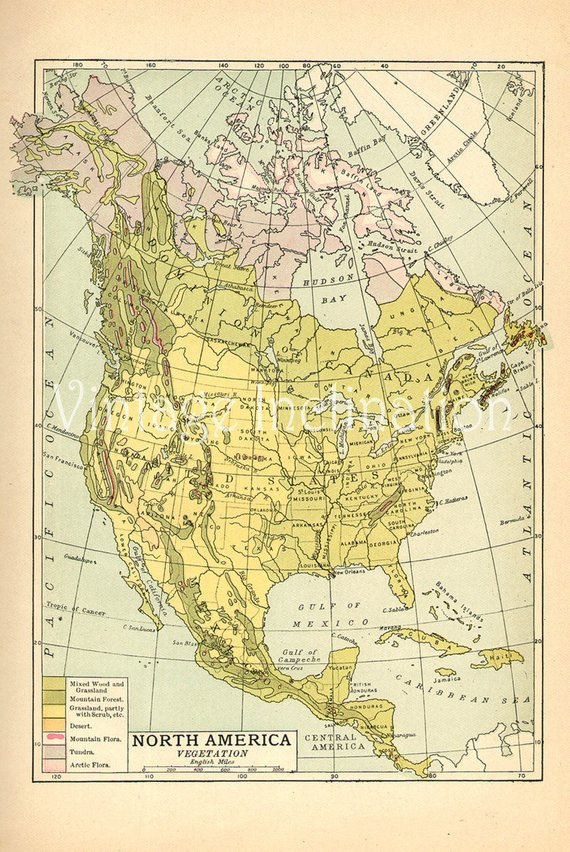 Vintage USA map, QUALITY 1907 United States of America vegetation ...