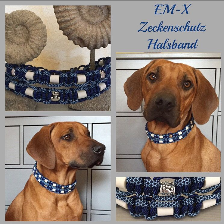 Em X Keramik Halsband Double Paracord Nach Wunsch Paracord Collars Ticks