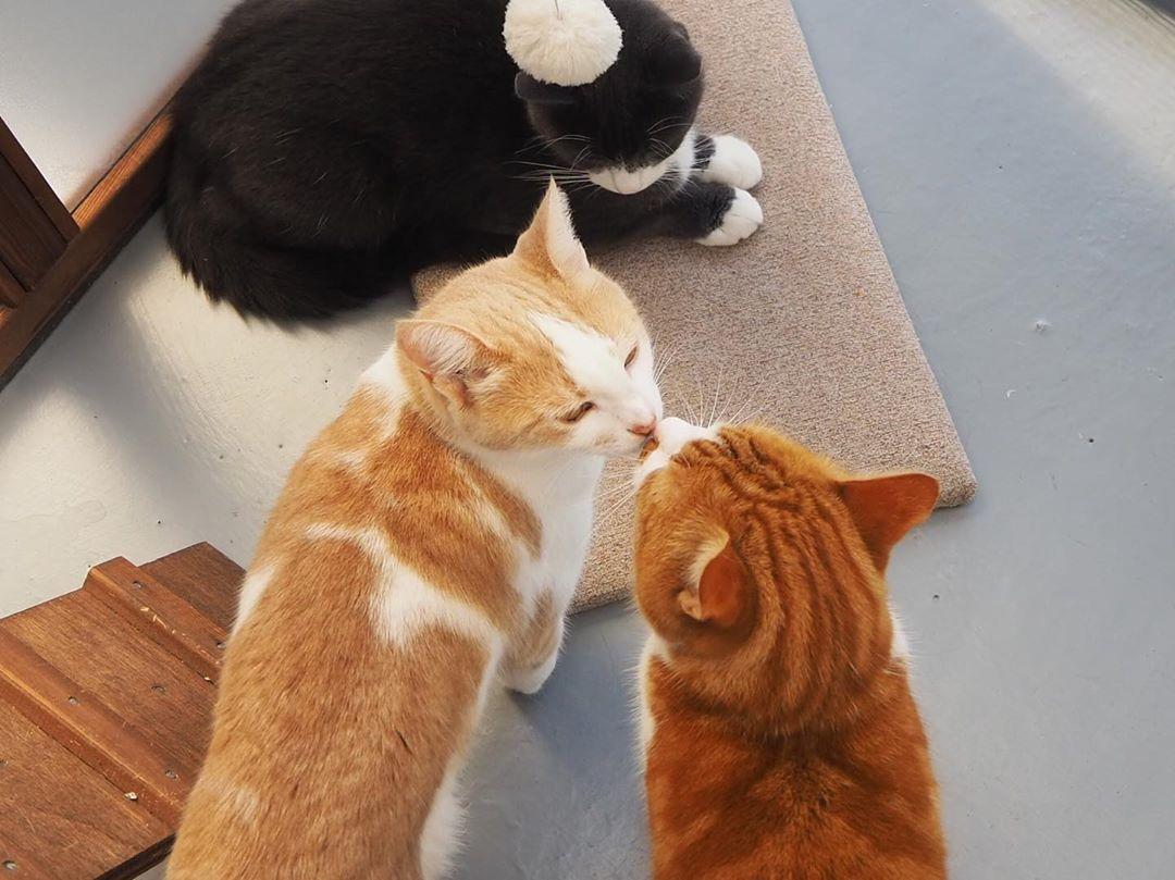 Kitty Kisses Cattery Yeovil Yeovilcattery Lovecats