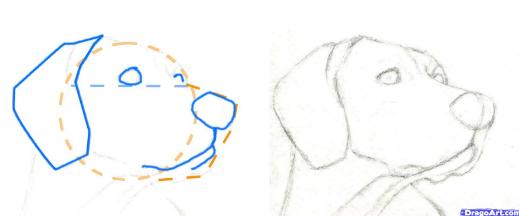 Como Aprender A Dibujar Animales Domesticos A Lapiz 3 Como Aprender A Dibujar Aprender A Dibujar Perros Dibujos A Lapiz