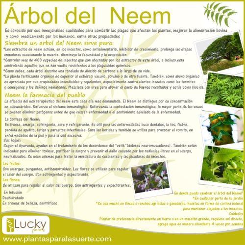 Lucky Plants - Regala Suerte en PlantasparalaSuerte.com - Bamboo Neem Tronco de Brasil Piedritas para complemento ideas