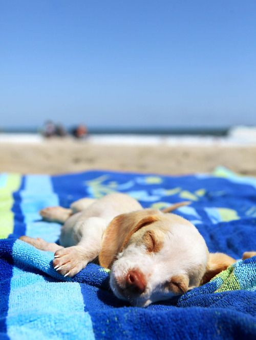 Beaches are for relaxing ...