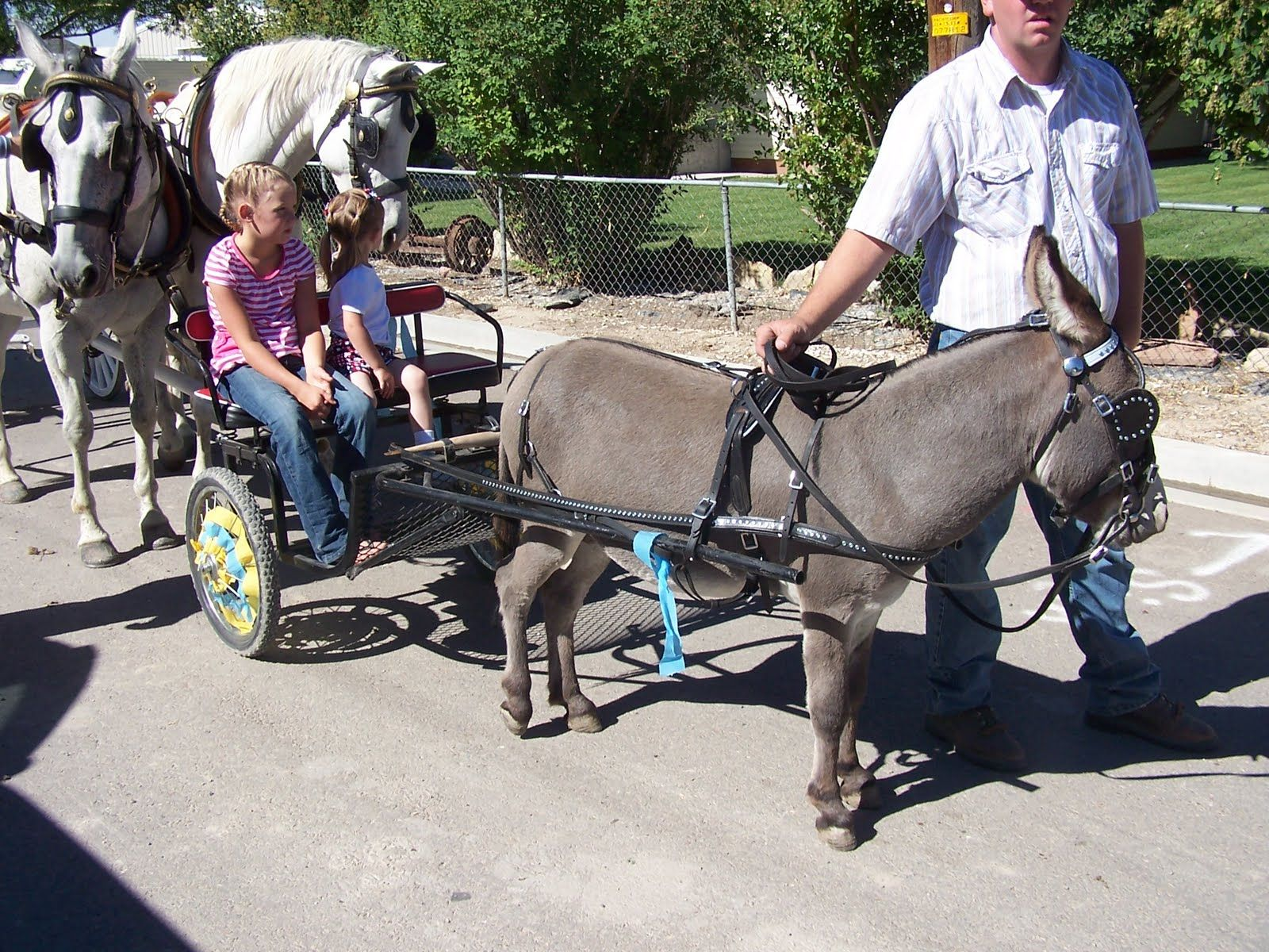 Someday I\'d like to have a miniature donkey pulled cart & a couple ...