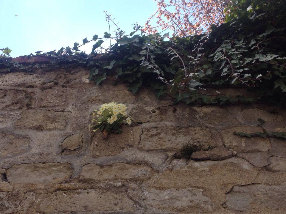 Muro con naturaleza #cementeriemomartre