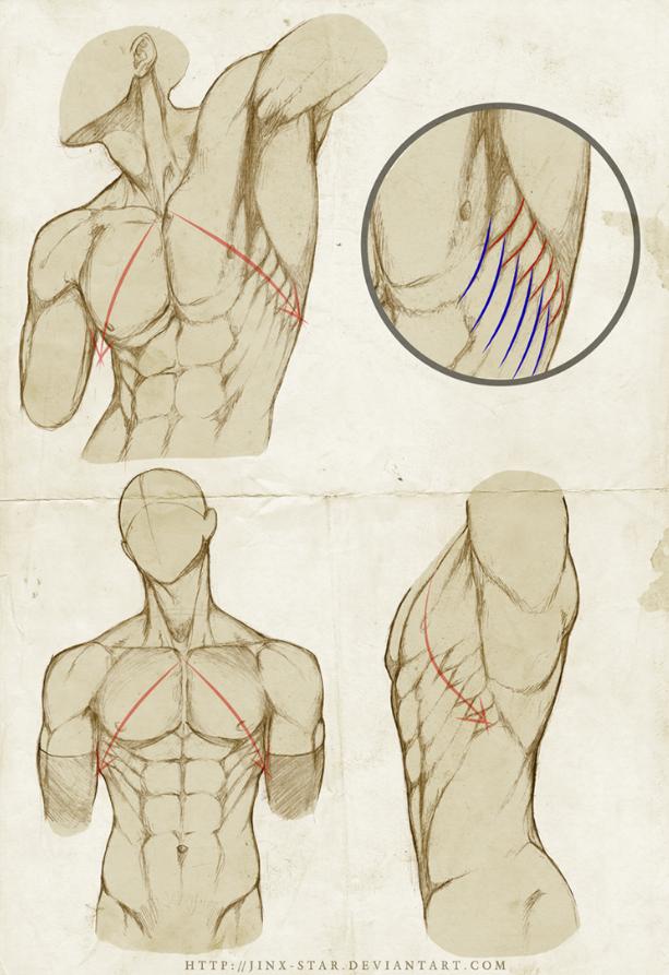 Pin by foxx 111 on ~great art tutorials~ | Pinterest | Anatomy ...