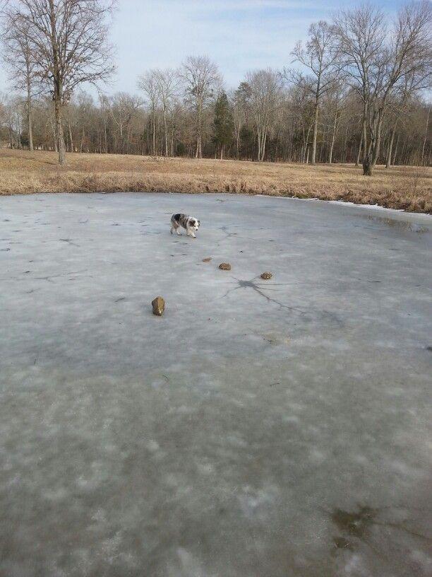 She loves frozen ponds
