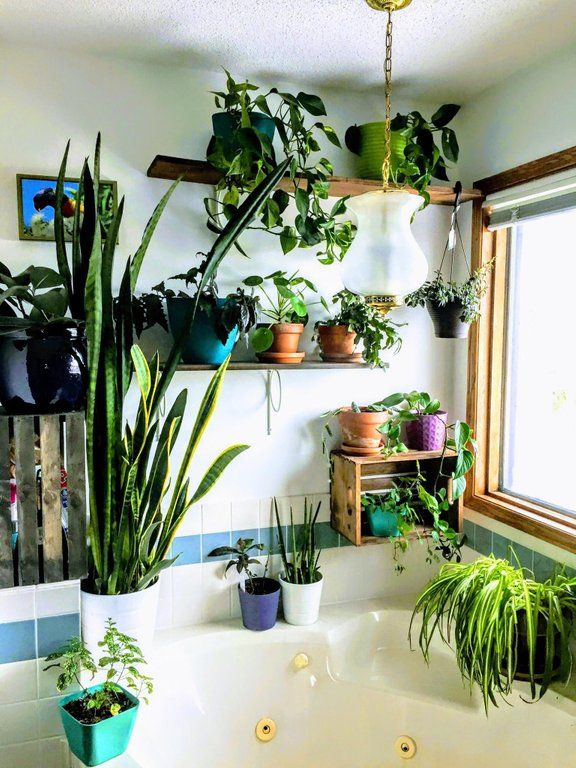 reddit: the front page of the internet | Bathroom plants ...
