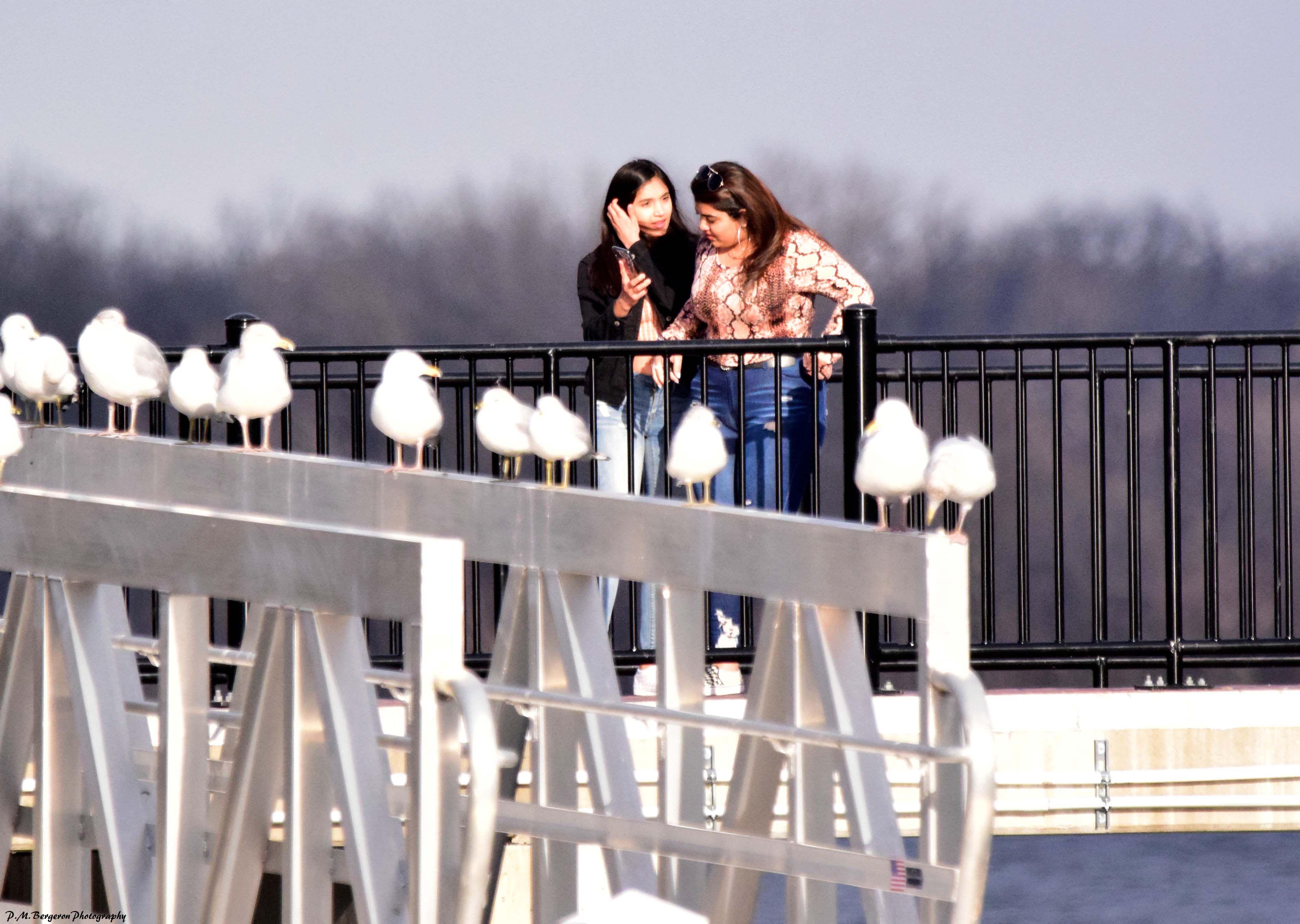 Birdwatching at bristol boroughs pier delaware river